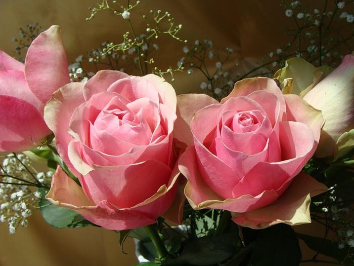 Lule dhe vetëm lule! 50038154_276