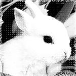 Аватары с животными - Страница 3 68669077_Dear_Rabbit_