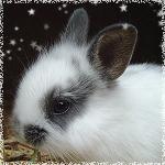 Аватары с животными - Страница 3 68669109_Baby_Rabbit_