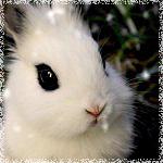 Аватары с животными - Страница 3 68669216_day_243__
