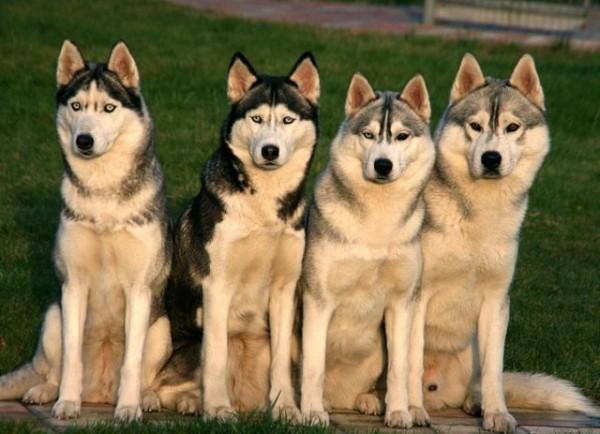Mascotas - Página 2 69577548_1295647384_1272113610_181819_179526