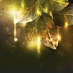 Аватары с цветами - Страница 6 72292389_1300564044_Avatar_122
