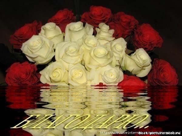 Красивые стихи 68013425_67081350_47817760_46584101_419043092