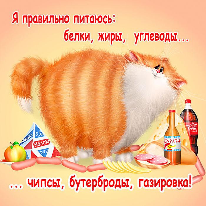 Прикольные истории о котах - Страница 3 73352364_5866