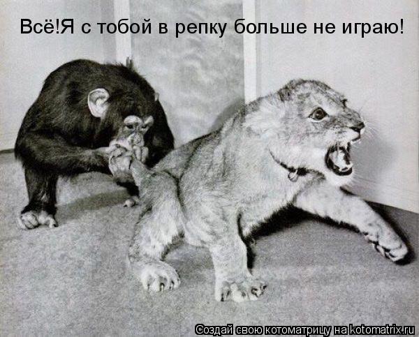 Смешные картинки 77870734_3507063_623789