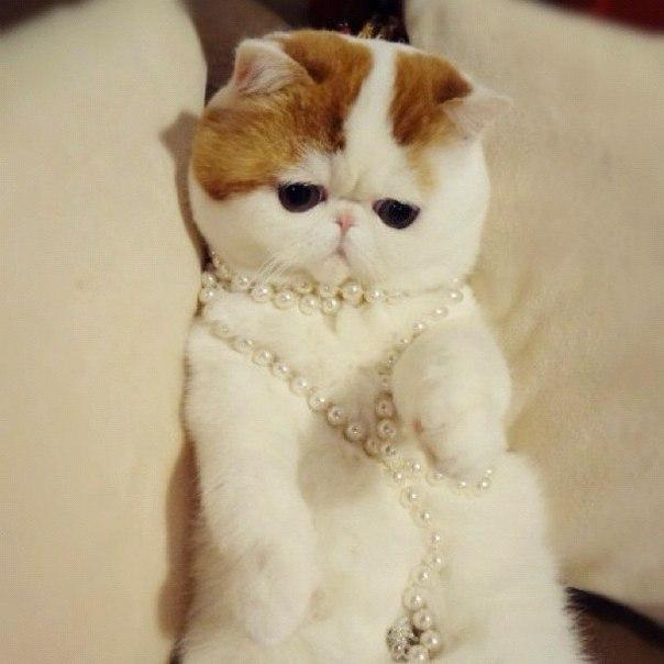 Самый милый кот на свете 87706490_large_HSGGTQ1XNog