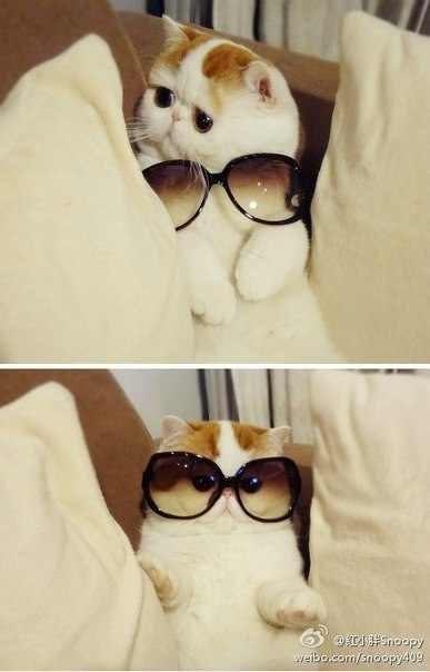 Самый милый кот на свете 86204990_large_12