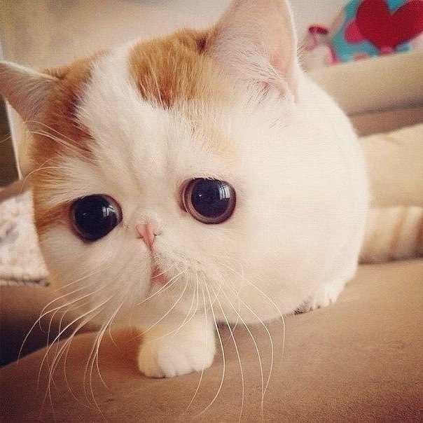 Самый милый кот на свете 86205008_large_11