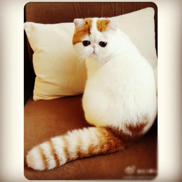 Самый милый кот на свете 86567642_large_33277ece66af11e180c9123138016265_7