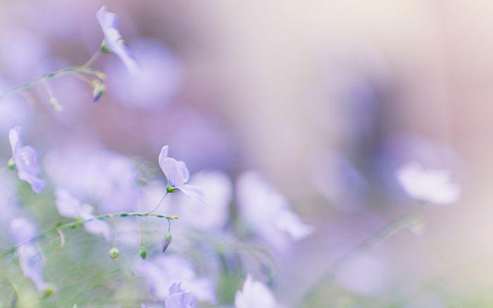 Цветы 87804382_large_2835299_flower02_onigirichang_nd_display
