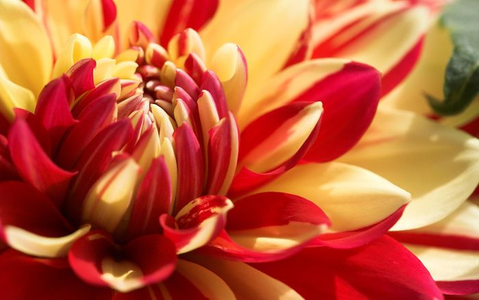 Цветы 87804384_large_2835299_orangeflower020_shenghunglin_ncnd_display