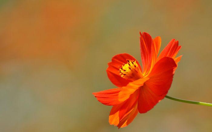 Цветы 87804386_large_2835299_redflower011_kanegen_by_display
