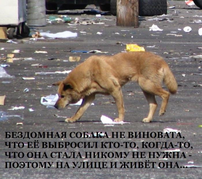 Стихи о собаках. - Страница 3 93596456_large_1105084_Homeless_Dog__Down_LA_River_4__727h645