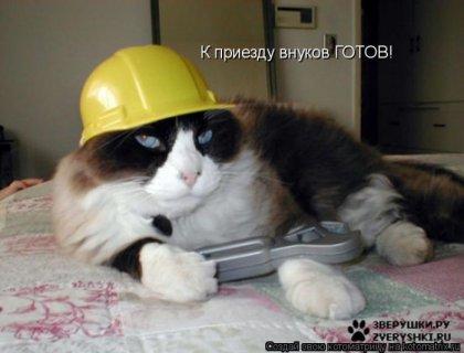 Кошачий юмор - Страница 6 96690040_1288900530_kotomatrix5