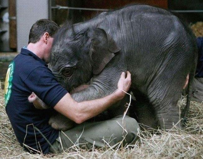 Animales, todas las especies 96881120_1
