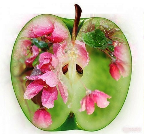 Яблоки в магии 98603944_71835433