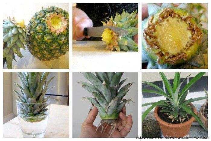 Садоводство и цветы 102090414_MexBDRarc3I