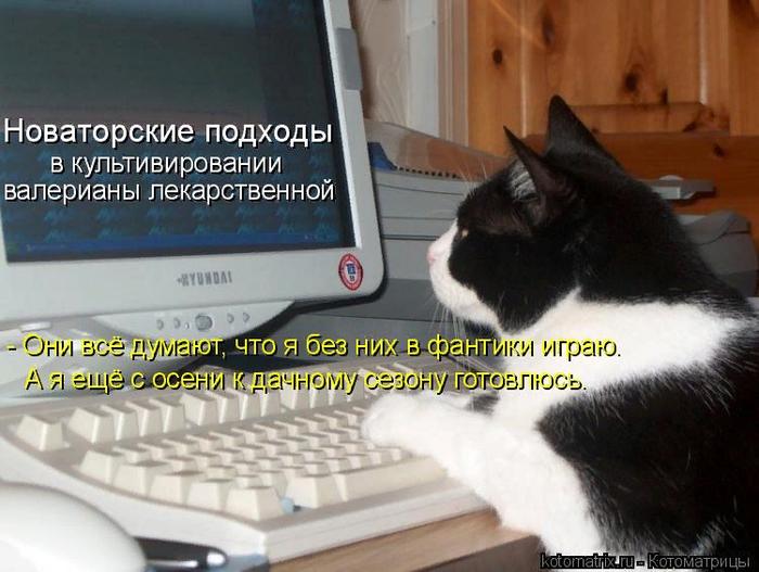 kotomatritsa_2 (700x527, 416Kb)
