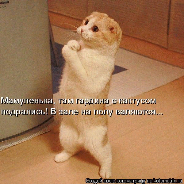 kotomatritsa_7q (600x600, 416Kb)