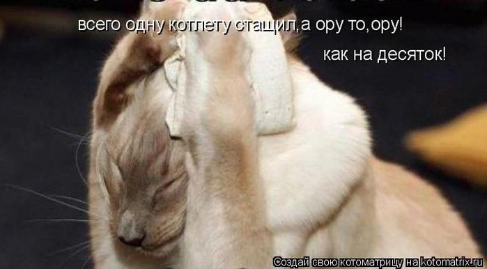 kotomatritsa_B (700x386, 271Kb)