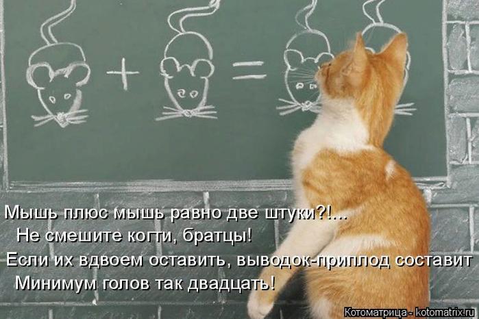 kotomatritsa_Q (700x466, 362Kb)