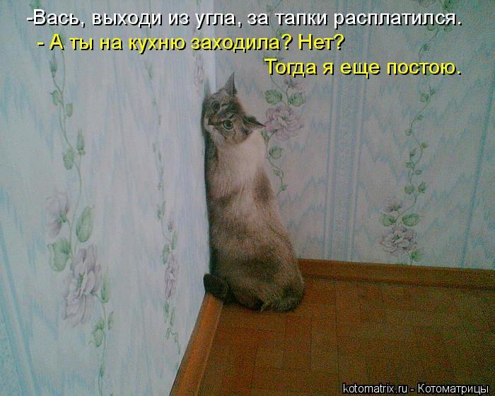 kotomatritsa_t (700x560, 435Kb)