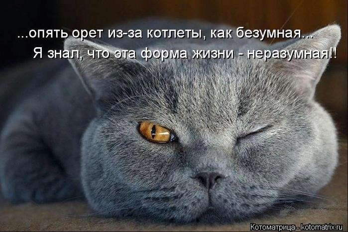 kotomatritsa_w (700x467, 392Kb)
