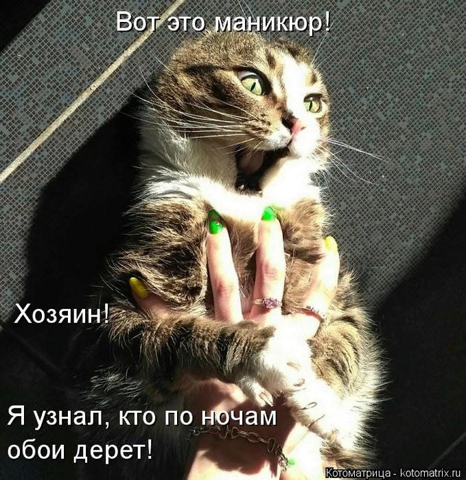 kotomatritsa_X_ (679x700, 615Kb)
