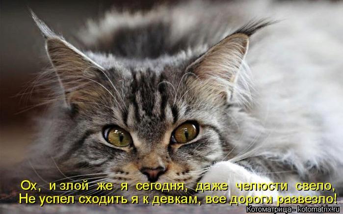 kotomatritsa_B (700x436, 370Kb)