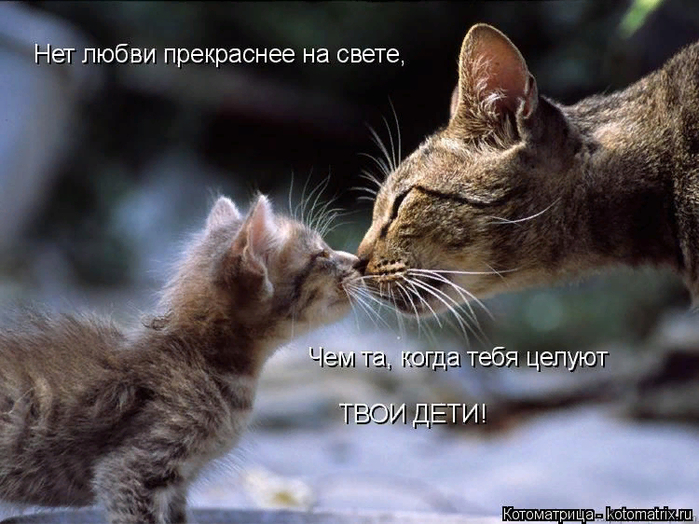 kotomatritsa_I (700x524, 407Kb)
