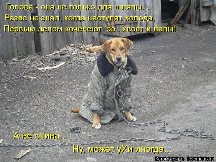 kotomatritsa_p (1) (700x524, 541Kb)