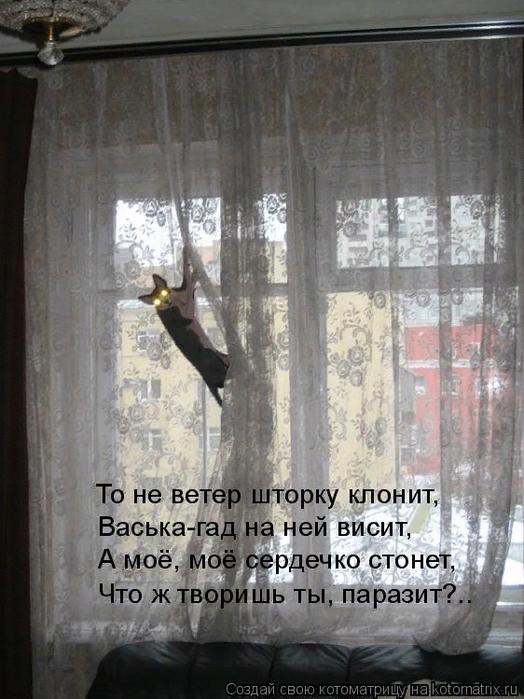 kotomatritsa_T (524x700, 431Kb)