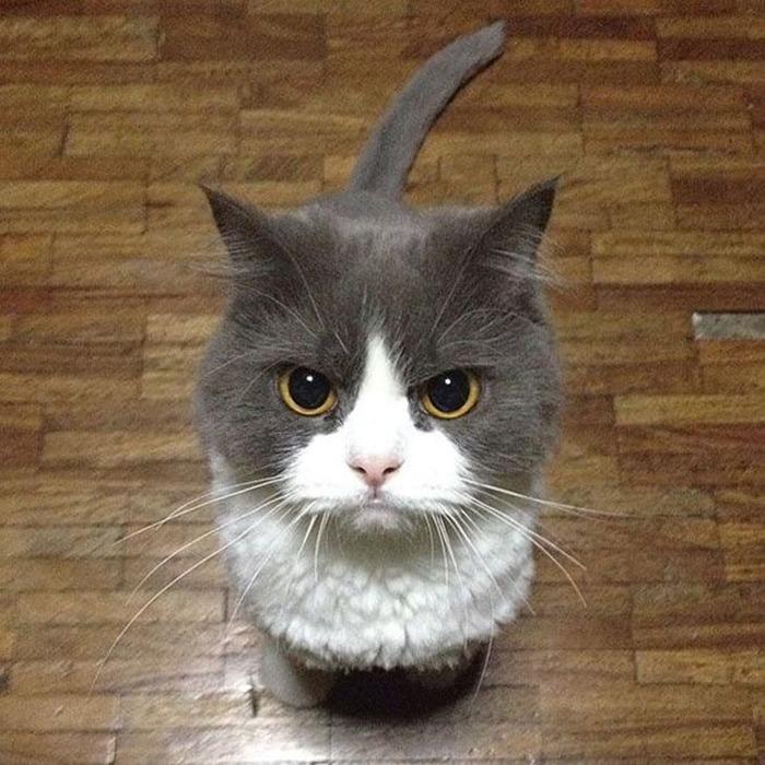 wsi-imageoptim-guilefulcats19 (700x700, 140Kb)