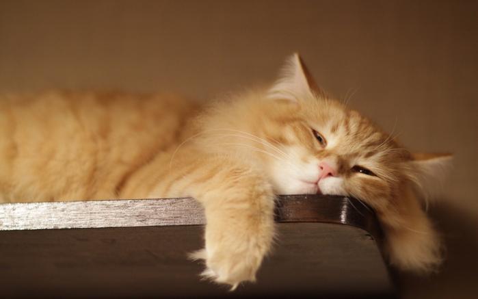 1171339-lazy-cat (700x437, 271Kb)