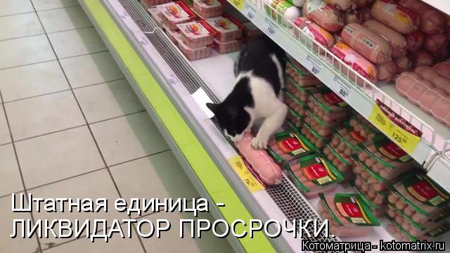 kotomatritsa_DQ (640x360, 185Kb)