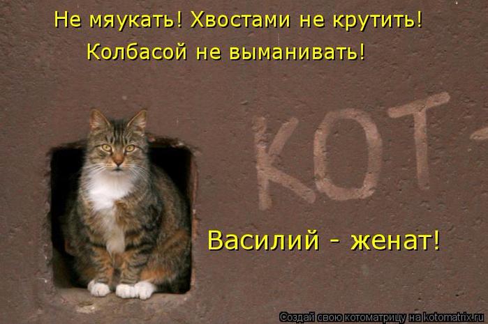 kotomatritsa_HS (700x465, 335Kb)