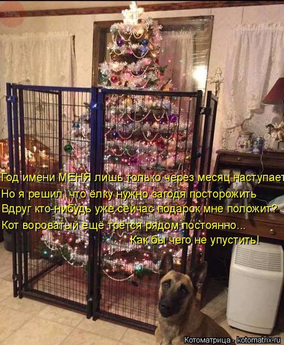 kotomatritsa_N (576x700, 502Kb)