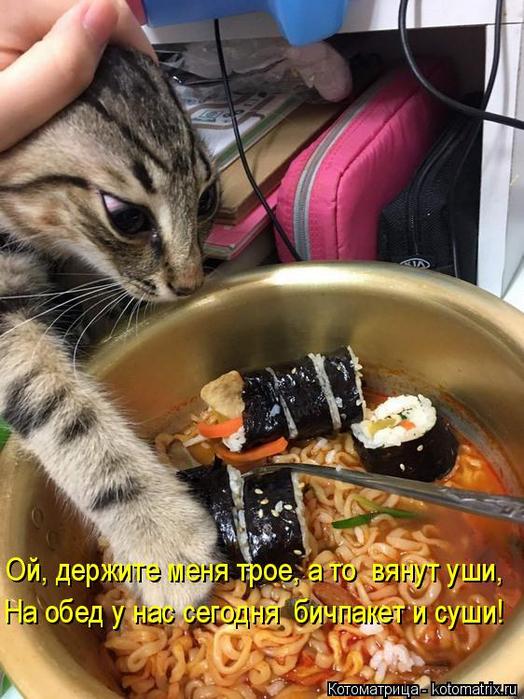 kotomatritsa__ (524x700, 416Kb)
