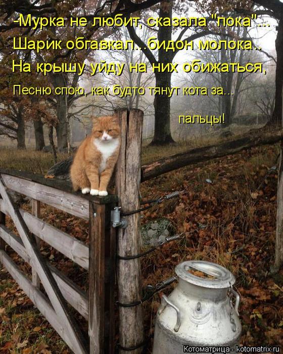 kotomatritsa_C (560x700, 527Kb)