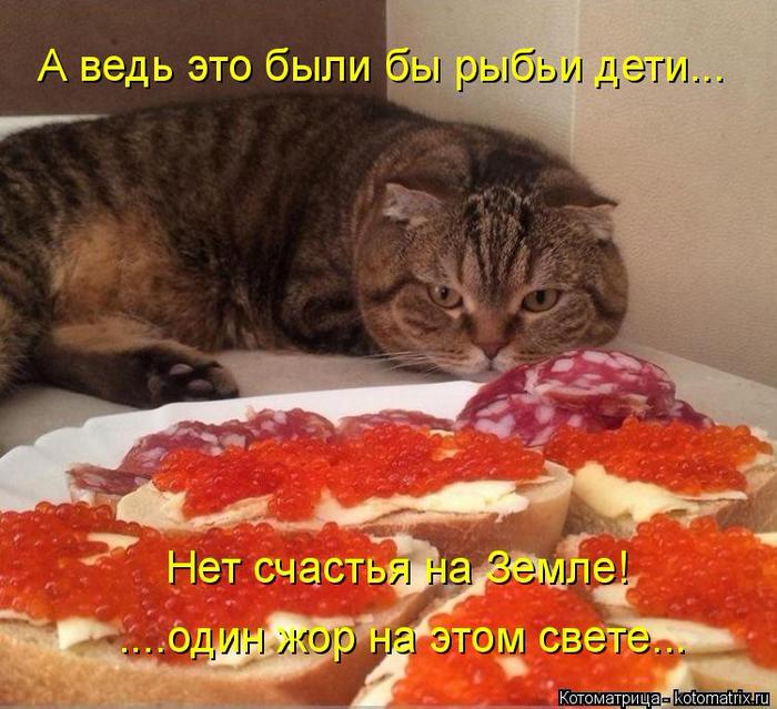 kotomatritsa_Er (700x639, 471Kb)