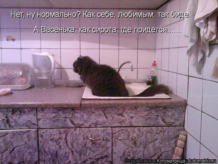 kotomatritsa_sT (700x524, 361Kb)