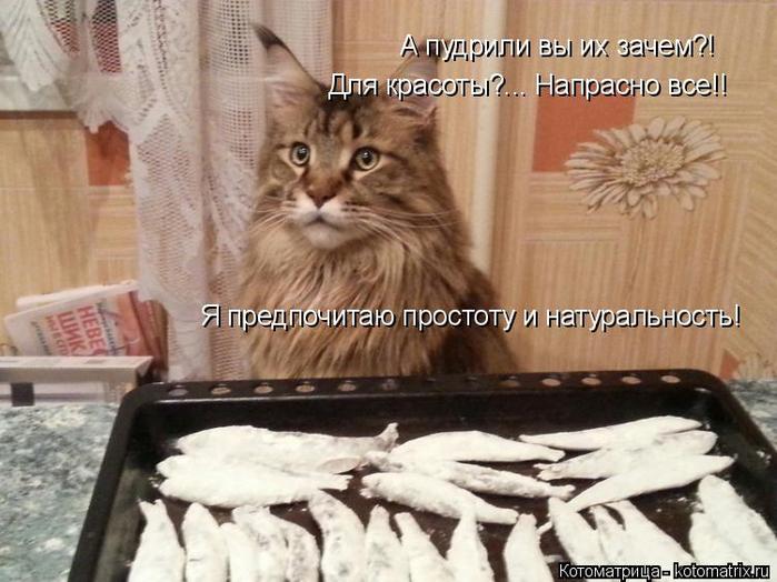 котоматрица
