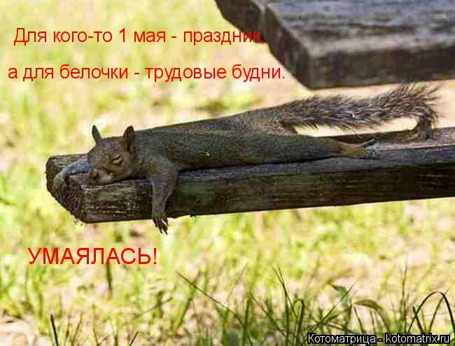 kotomatritsa__q (650x494, 213Kb)