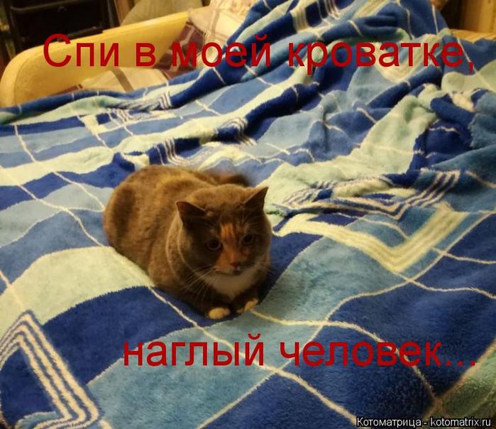 kotomatritsa_E (700x604, 464Kb)