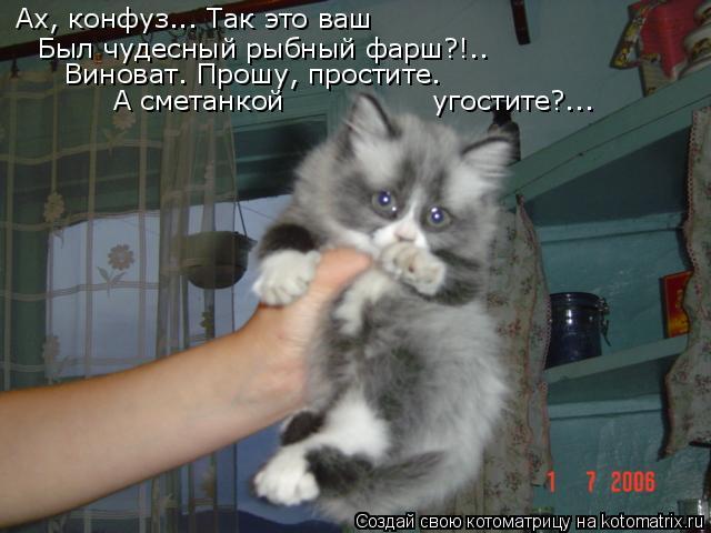 kotomatritsa_G (640x480, 177Kb)