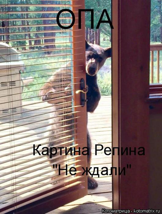 kotomatritsa_j (530x700, 418Kb)