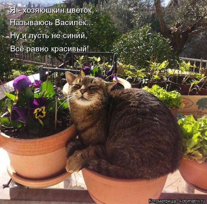 kotomatritsa_SJ (700x688, 544Kb)