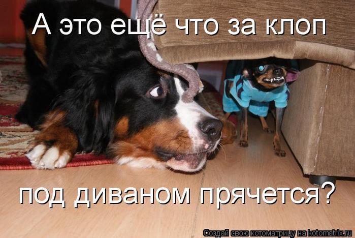 kotomatritsa_g (700x468, 324Kb)