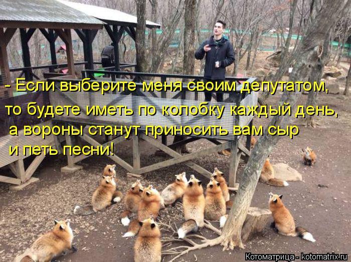 kotomatritsa_Mi (700x523, 365Kb)