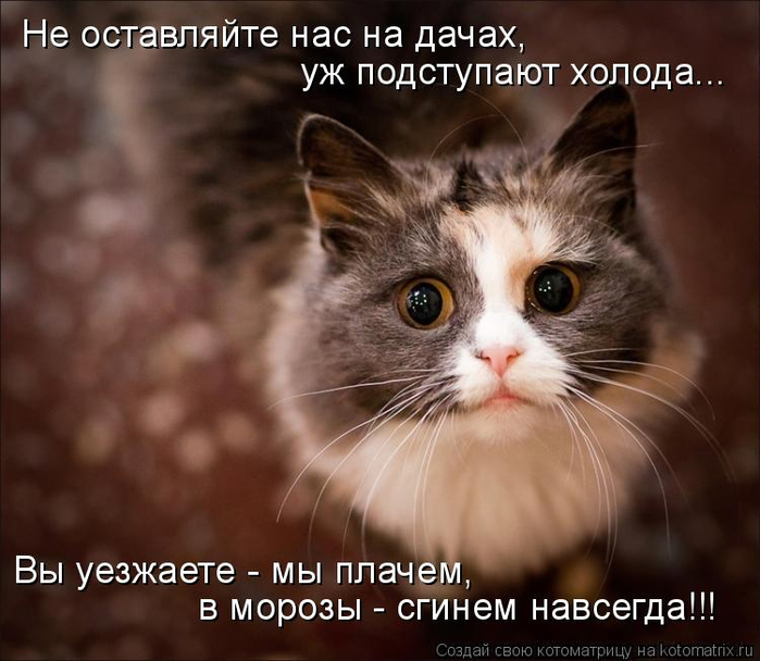 kotomatritsa_q (2) (700x608, 330Kb)